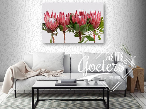 Buy one get one free: Protea Straight up - Dark pink