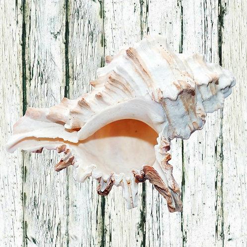 35cm Sea Shells each - different options