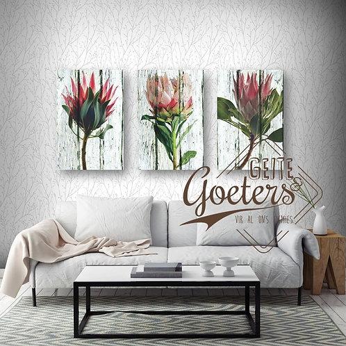 Protea Colours