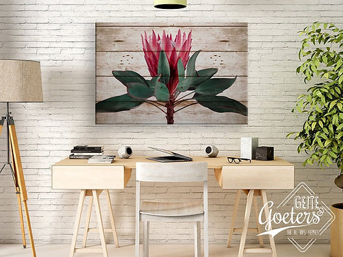 2020 Rustic Protea Straight Up Bright Pink