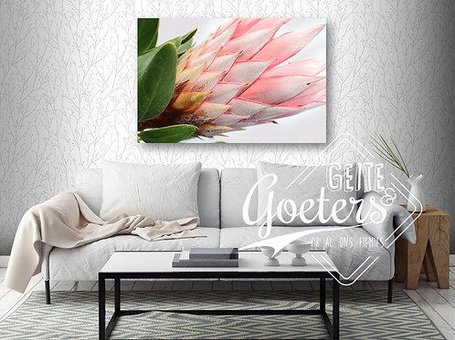 Protea single side - light pink