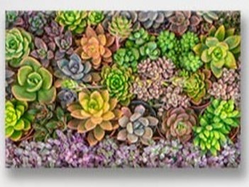 2020Succulent light Vinyl Set of 4 Placemat