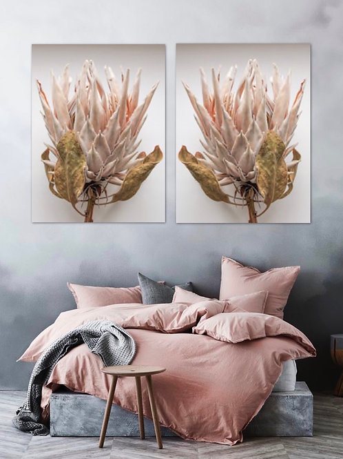 Set of 2: Dried Protea A1
