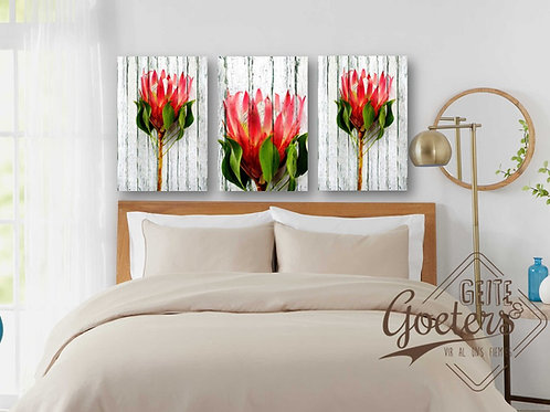 Protea Rustic Red