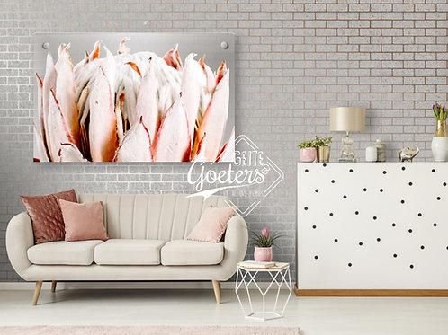 Perspex Protea Head Light Pink