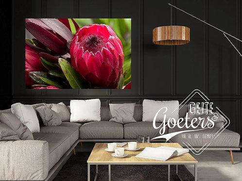 2021 Wood Protea Bright Pink