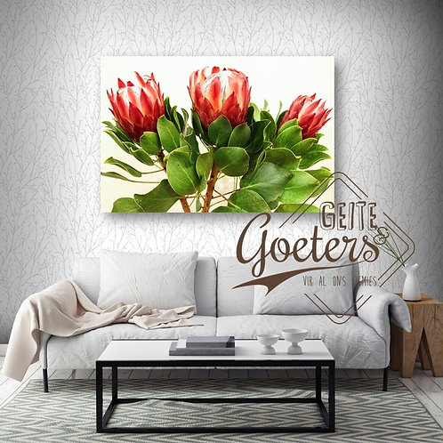 Buy one get one free: Protea Trio Red