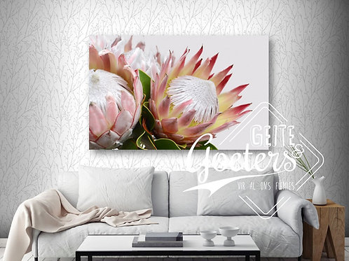 Protea bunch side - light pink