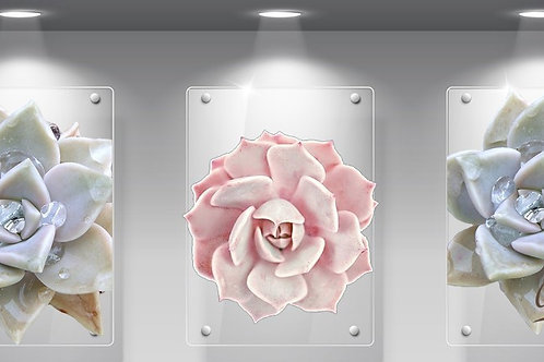 Perspex Succulent pink and white Set of 3