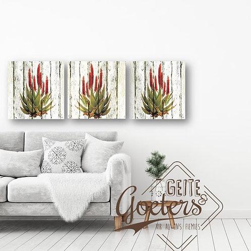 Aloe Trio  (30cm each)