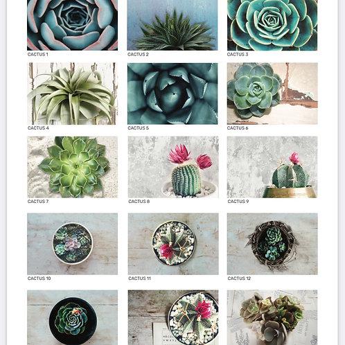 2021 Cactus range kitchen mat