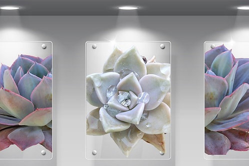 Perspex Succulent purple and white Set of 3
