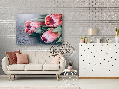 Pastel Protea Trio Pink with Grey