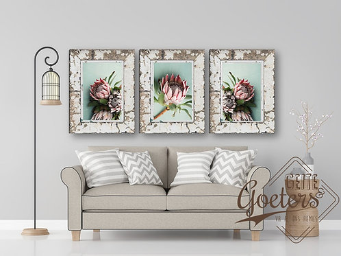 Set of 3 FRAMED: Set of 3 Protea Green Trio and leaves