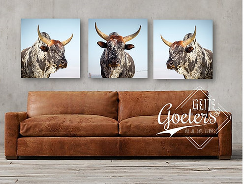 SQUARE SPECIAL: Nguni Light Brown set of 3