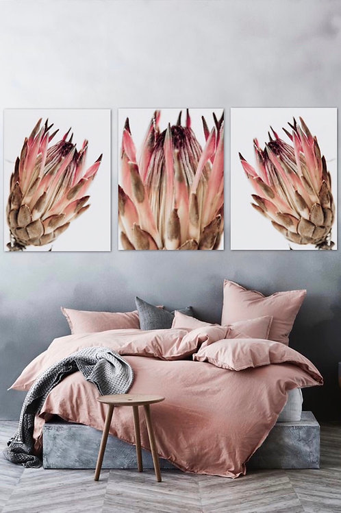 Set of 3: Dried Protea  A2