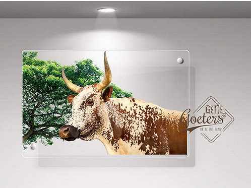 Perspex Light Brown Nguni with green
