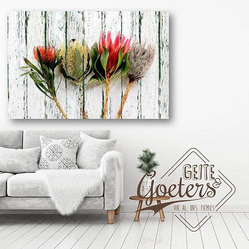Protea Quartret