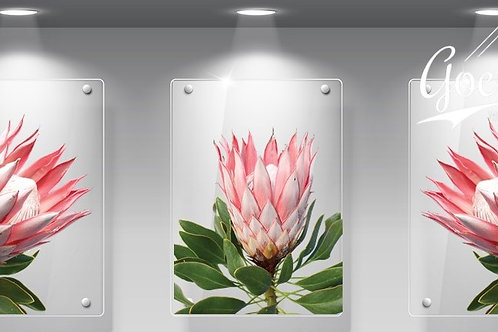 WHOLESALE: Perspex Protea Bright Pink Set of 3