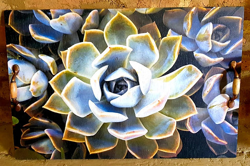 Xtra Large Tray: Succulent