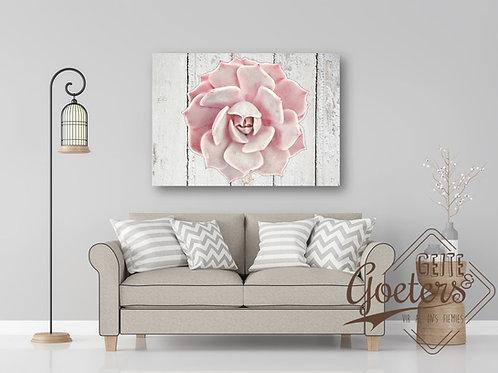 WHOLESALE Succulent Light Pink