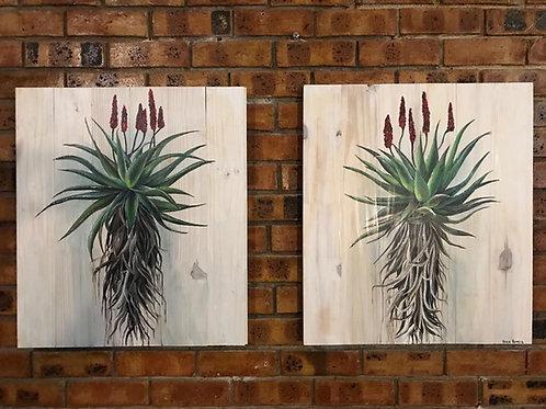 Aloe set of 2