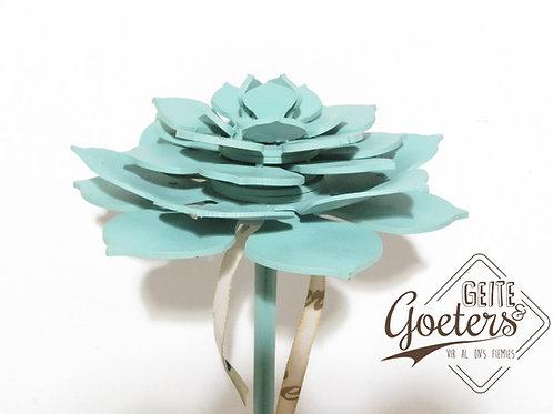 Protea Flower Single Option 2