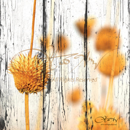 Dried Field Flowers 2 - small