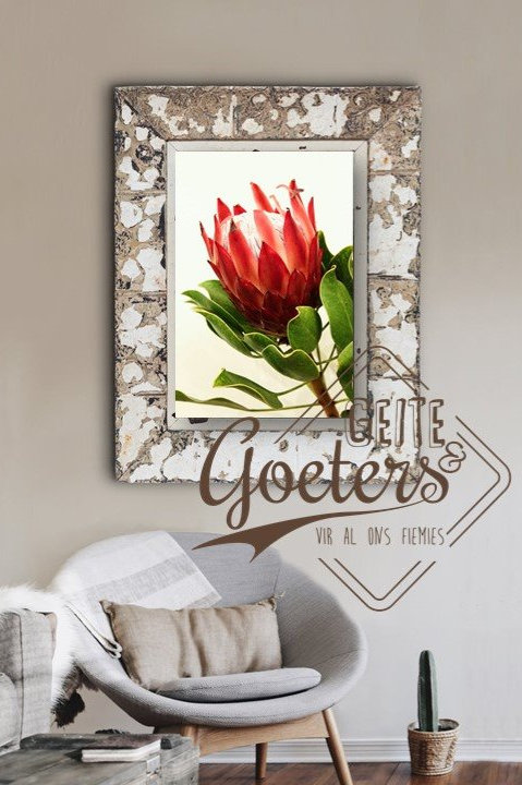 FRAMED: Protea Red Side