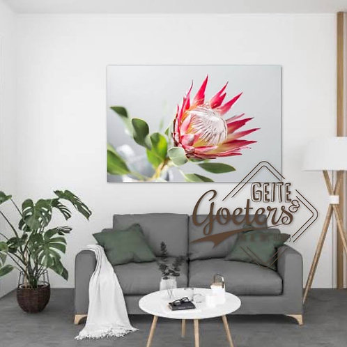 Protea open 2020