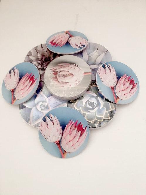Coasters: Protea