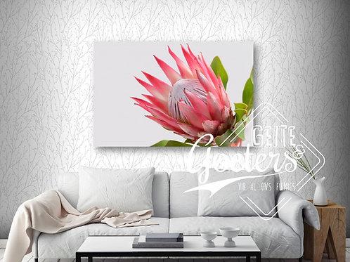 Protea single side - bright pink