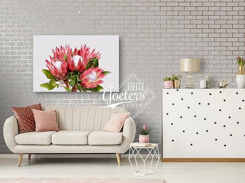 Protea Bunch Plain
