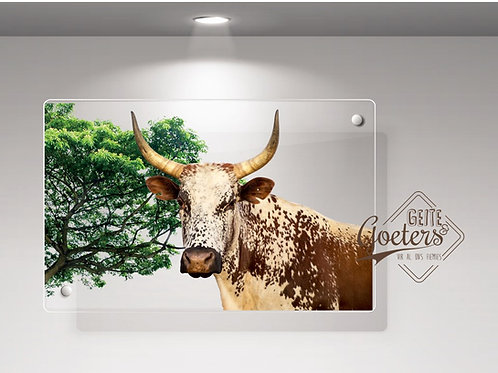 WHOLESALE: Perspex Light Brown Nguni with green