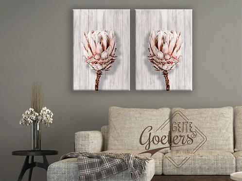 Protea Singles  Light Background