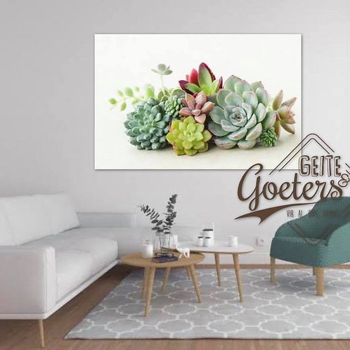 2020 Bunch Succulent on white