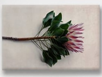 2020 Protea Single set of 4 Vinyl Placemats