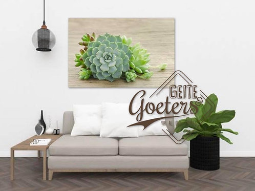 2020 Green Succulent with wood
