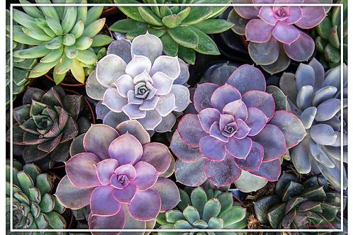 Vinyl Placemats - Set of 4 - Succulents 1