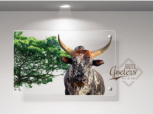 WHOLESALE: Perspex Nguni Colours with green
