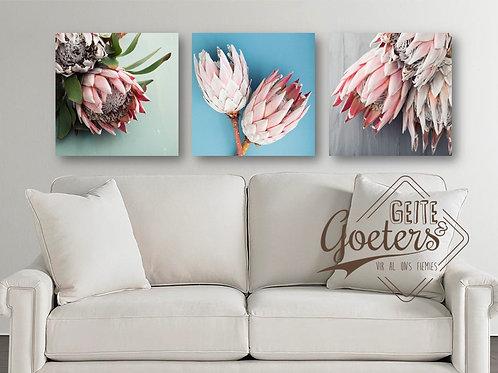 Set of 3 Protea Pastel Colours