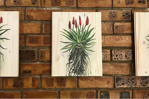 Set of 3 Aloe