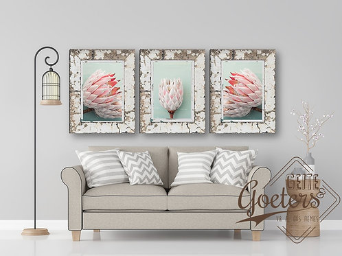 Set of 3 FRAMED: Set of 3 Protea Green Light Pink