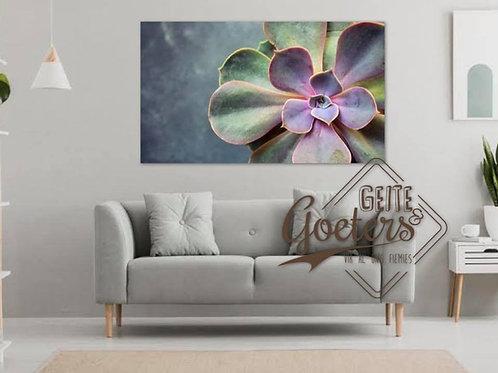 2020 Purple Succulent on grey