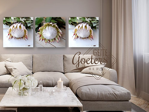 Special: New Protea Rustic White Singles of 3