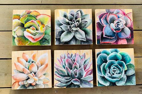 Set of 3 Succulent