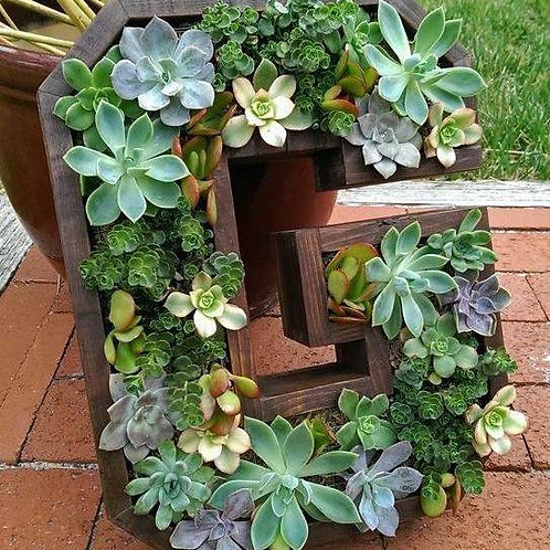 Initial Planter wood