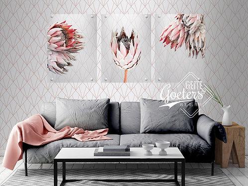 Perspex Protea Grey Series Set of 3