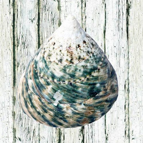 A3 Sea Shells - different options