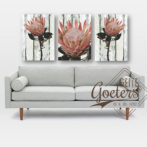 Set of 3 Protea Vintage Dusty pink